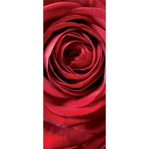 Komar Fototapet - Red Rose
